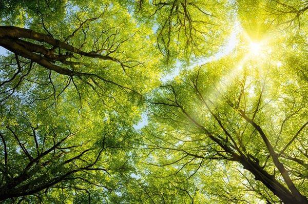 100% CO2-neutral – ein Plus für unser Klima