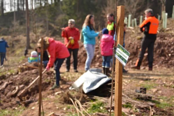 Foto der Baumpflanzaktion, Kunden pflanzen Bäume in einem Waldgebiet
