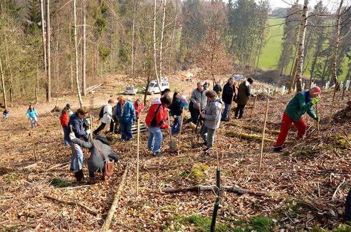 Die Teilnehmer beim pflanzen der Setzlinge auf der Waldfläche