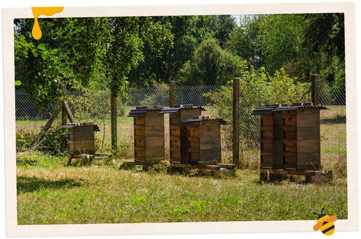 Sechs Bienenstöcke in einer Reihe auf dem Grundstück des Wasserwerks