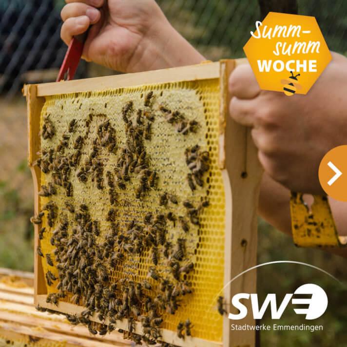 Viele Bienen krabben auf mit Honig gefüllten Waben.